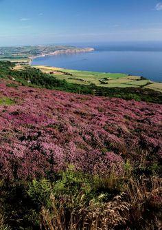 Peat Moorland of the North York Moors near the coast at Ravenscar