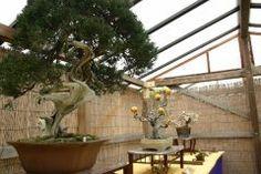 中区にある三溪園で盆栽展してましたよ 花梨椿雑木などを中心とした盆栽約50鉢が飾られてるそうです 価値とかはよくわからないんだけど盆栽の木の形とかあれって大木のミニチュアみたいで面白いよね 純粋に見て楽しめたらいいんじゃないかな  http://ift.tt/2jxRRB5 tags[神奈川県]