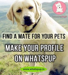 Find a Mate for your pets - Make your profile on Whatspup and start looking for matches for your furry friend. Call 011-47501136 for more details