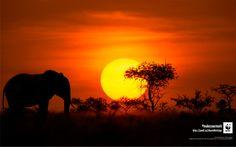 WWF_wallpaper_june2016_2560x1600.jpg (5334×3334)