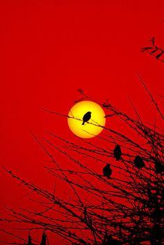 Watching the sun go down! Photographer: Amer Raja