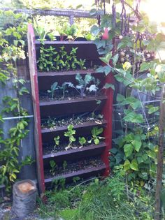Our vertical staircase vegetable garden Organic Gardening Tips, Garden Fencing, Growing Plants, Horticulture, Vegetable Garden, Beautiful Gardens, Ladder Decor, Helpful Hints, Roots