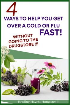 Here are easy home remedies to help you break free from the drugstore! Herbs you can use to help fight off the cold and flu. Get rid of those pesky symptoms like cough, sore throat, and build your immune system at the same time. #cold #flu #getridof #homeremedy #homeremedies #immuneboosting #immune #immunity #healingharvesthomestead Natural Cures, Natural Health, Get Over A Cold, Health Tips, Health And Wellness, Medicinal Herbs, Herbal Medicine, Nutritious Meals, Natural Living
