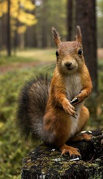 There are lots of squirrel like mammals like the ground hog, gopher as well as prairie dog. When it comes to foods, what do squirrel love to eat? Forest Animals, Nature Animals, Woodland Animals, Animals And Pets, Baby Animals, Cute Animals, Wild Animals, Funny Squirrel Pictures, Cute Squirrel