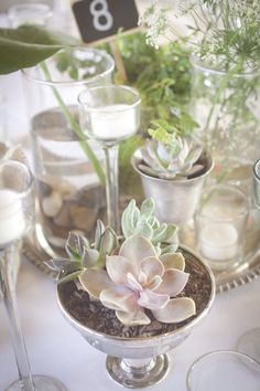 potted succulents, herbs and candlelight