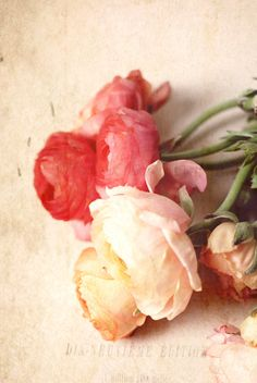 In Bloom-Romance
