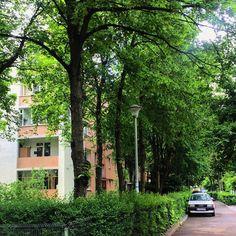 "55 aprecieri, 1 comentarii - Ana •CREATIVE POSTS• (@solnitacuvise) pe Instagram: ""Clujul îmi e casă de 3 ani. 🌿 #city #summer #green #nature #instanature #view #romania…"" Creative, Plants, Travel, Instagram, Viajes, Destinations, Plant, Traveling, Trips"