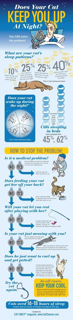 Sometimes pets can test our patience. Here are some tips to help your kitties let you sleep through the night. www.SPCAmc.org