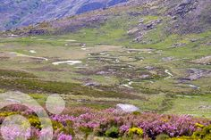 Meadows, moorland, grassland, heathland.... More information to plan your trip to #Sanabria in www.qnatur.com