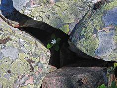 Op de meest vreemde plaatsen weten planten zich nog te vestigen; de laatste  jaren zoeken bomen en planten het steeds hogerop: http://www.oppad.nl/?bestemming=bergflora-zoekt-het-hoger-op