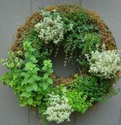Living Herb wreath:  1.  Simply plant 5 to 6 herbs starters in a sphagnum filled, wire wreath frame.   2.  Every couple of days take it down, lay it on the lawn and soak it with the hose.   3.  Allow the wreath to sit for a few minutes to absorb and drain any excess water.   4.  As it fills out you may need to cut it back to keep it from becoming overgrown.