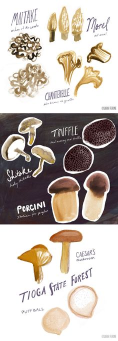 Lettering mixed with thoughtful illustrations... just lovely | Sarah Ferone