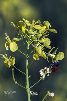 Juegos de primavera - Recolectando el polen en primavera