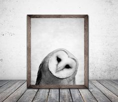 Hey, I found this really awesome Etsy listing at https://www.etsy.com/ca/listing/264703386/wall-art-owl-art-owl-print-bird-prints