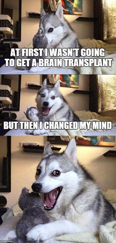 Bad Pun Dog Meme | AT FIRST I WASN'T GOING TO GET A BRAIN TRANSPLANT BUT THEN I CHANGED MY MIND | image tagged in memes,bad pun dog | made w/ Imgflip meme maker