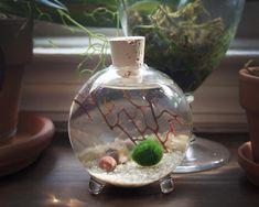 Moss + Twig Marimo Ball Globe Terrarium - Sand