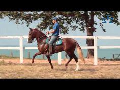 MANGALARGA MARCHADOR - O CAVALO DO BRASIL - YouTube