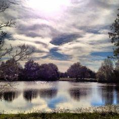 Back yard at lake