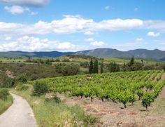Spring in France's Languedoc wine region – why quiet towns, sunny spring weather and plenty of great food and drink make this the perfect time to visit. Mark Of The Lion, Pompeii Ruins, Roman City, Frozen In Time, Southern Italy, Spring Weather, Archaeological Site, City Lights, Vineyard