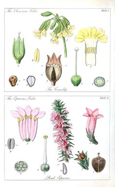 Botanical-Educational-plate