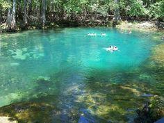 Manatee Springs – Chiefland, Florida | Atlas Obscura