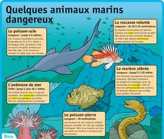 Quelques animaux marins dangereux   Le Petit Quotidien, le seul journal d'actualité pour les enfants de 6-10 ans