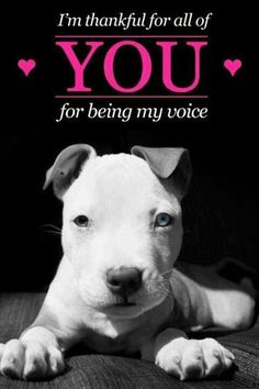 You're welcome! #dogs #pets #PitBulls Do not rule out a pit bull because of their awful (and also false) reputation of being mean. They are only mean if they are raised mean.