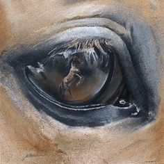 I love this with reflection of a horse in the eye