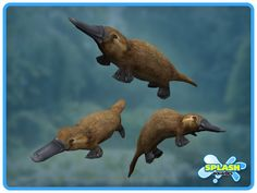 These adorable platypus (top an. Duck Billed Platypus, Contents, Creatures, Swimming, Fun, Animals, Pintura, Swim, Animales