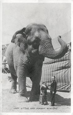 Vintage Elephant picture, Oh how I love elephants.