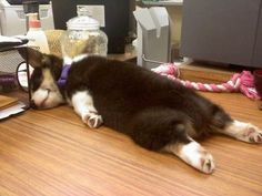 Corgis sleep in the best positions! Also romy has that same rope! :)