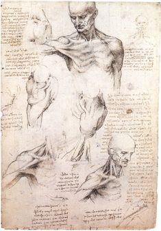 Leonardo da Vinci: Recto: The superficial anatomy of the shoulder and neck. Verso: The muscles of the shoulder (Da Vinci (artist) Creation Date: Materials: Pen and ink with wash, over black chalk Dimensions: x cm Anatomy Head, Anatomy Drawing, Human Anatomy, Neck Drawing, Anatomy Study, Anatomy Art, Leonardo Da Vinci Dibujos, Skeleton Drawings, Human Skeleton