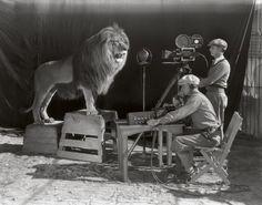 Tournage de l'intro de Metro-Goldwyn-Mayer (MGM) avec le lion (Léo le lion) qui rugit.