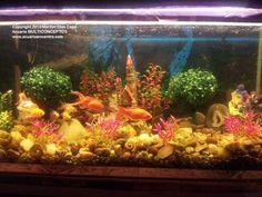 Peces tropicales de agua dulce.: Fotos de los 17 acuarios finalistas de nuestro concurso 2013.