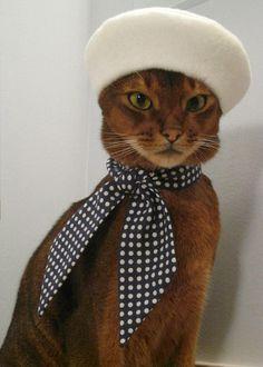 #Cats.  White Felt Beret. @Haley Kuntz For Baby Sir.