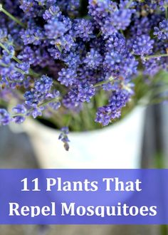 11 Plants That Repel Mosquitoes: my house in Nashville is completely overrun! This would be so helpful