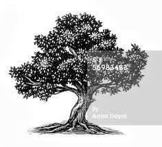 olive tree graphic - Google Search