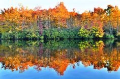 8x10 matted back North Carolina Lake Tree by ClandestineStudio