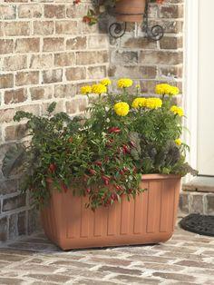 Self-Watering Vegetable Planter - Gardener's Supply Company- great for herbs,flowers & vegtables :)