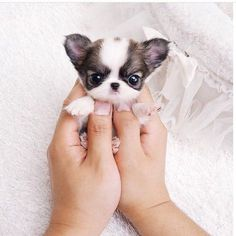 Incredible!    Welcome to Petworld.net.au    #ilovemydog #lovepuppies #catlover