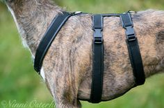 The DT-harness is the safest for your sighthound. Properly fitted, it is impossible for the dog to escape from it. It's made to be comfortable and not to disturb the dogs movements. From Jecka Design.