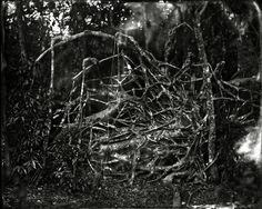 Lisa Elmaleh, collodion prints of the Everglades, via www.landscapestories.net