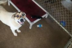 Lydia is an adoptable Terrier Dog in Johnson City, TN. Female dogs are 95.00. Male dogs are 80.00. This pays for their spay or neuter. If they are already spayed or neutered, they are only 35.00! For ...