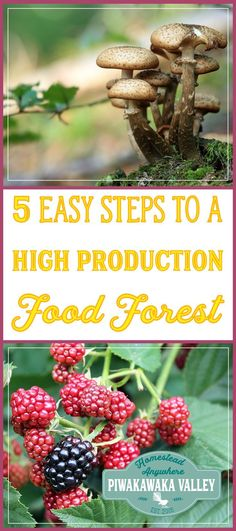 Growing a food forest is a great way to use permaculture to ensure you have a sustainable, organic, perennial food production space in your backyard. We include 5 steps to creating a food forest at your place. small farm hacks, urban garden, saving money  #gardening #beginnergardening #getstartedgardening #growfoodnotlawns #growfood #vegetablegarden #gardens #gardeningtips #gardeninghacks #homesteading #homesteadhippy #selfsufficiency #preppers #growyourowngroceries #growyourown