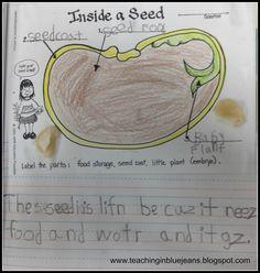 Fun with seeds in Kindergarten!  Hands-on seed activities.