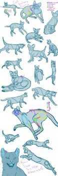 I saw the biggest cat dump EVR by MamaMii