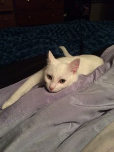 I think it's past Misty's bedtime