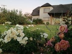 South Africa, Floral Wreath, Houses, Wreaths, Plants, Home Decor, Homes, Floral Crown, Decoration Home