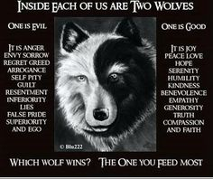 native american sayings about wich wolf is the stronger one the one you feed