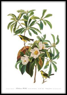Plakat med fugle på gren med grønne blade